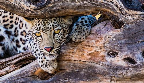 Book one day Ngorongoro Crater Safari via Gilbert Moshy