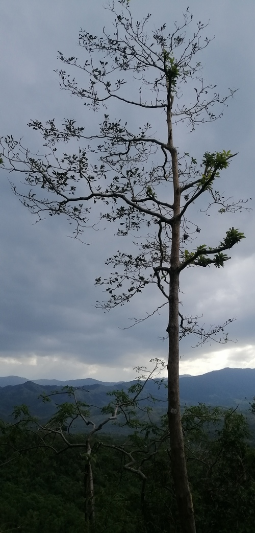 Tree on mountain edge via Opel Mendoza