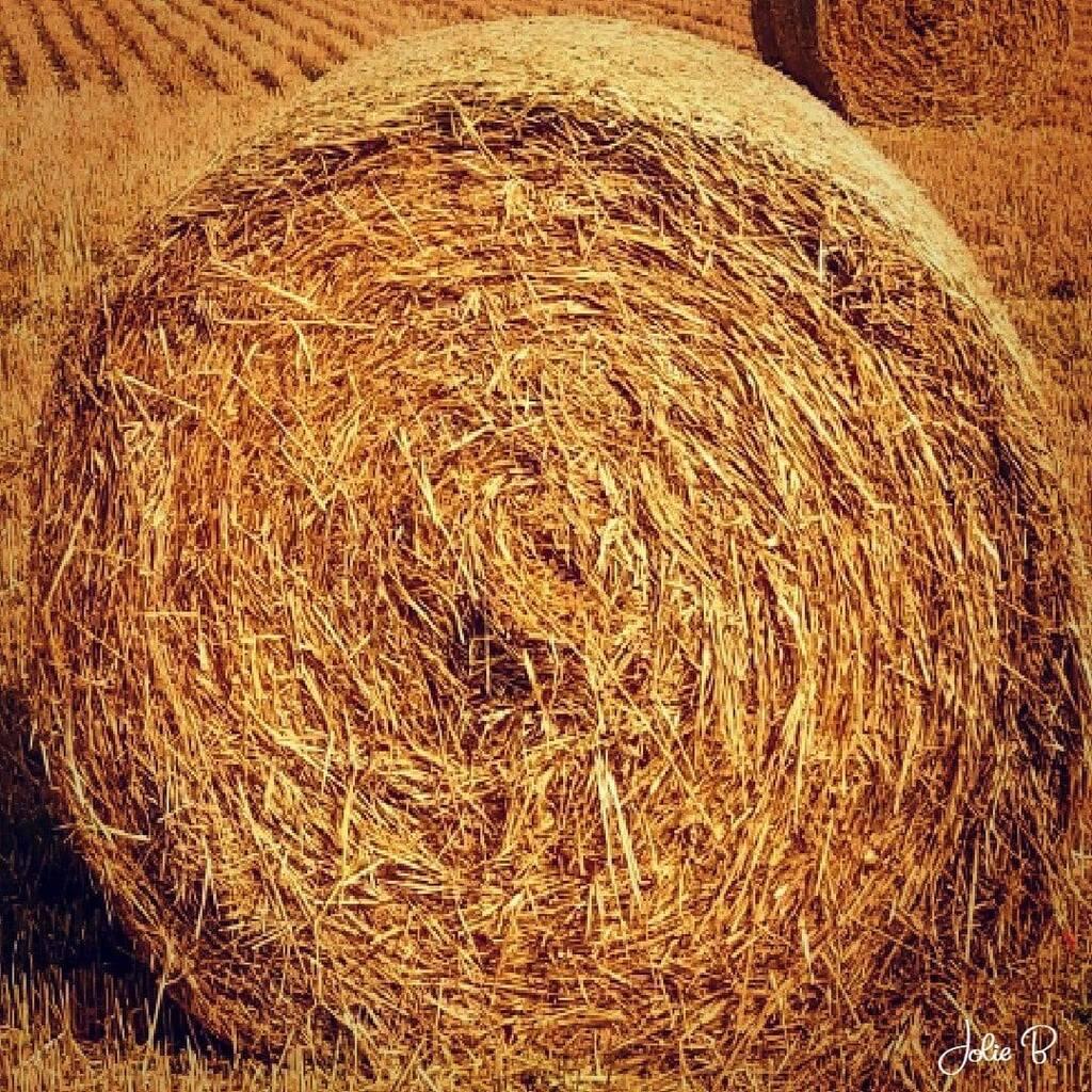 Bale by Jolie Buchanan via Jolie Buchanan