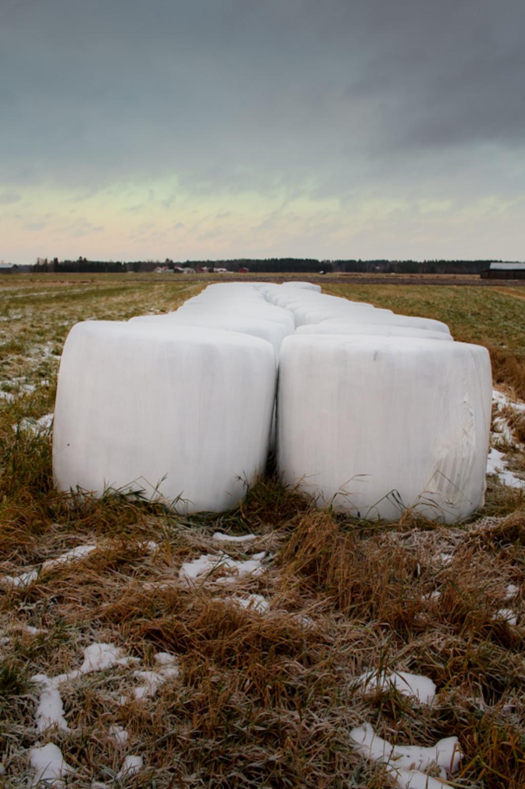 Nicely lined up hay bales on the early winter fields. The ba... via Jukka Heinovirta