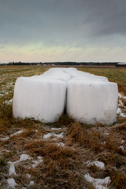 Nicely lined up hay bales on the early winter fields. The ba... via Jukka Heinovirta