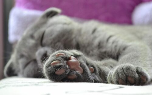 Reasons To Check Your Cat's Paws Daily