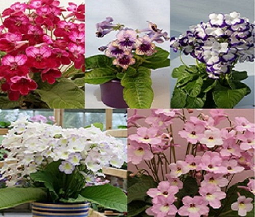 Some New Eye catching flower plants for Indoors and Outdoors