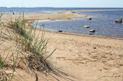 A close-up of a sand dune on a beach at Kalajoki, Finland. D... via Jukka Heinovirta