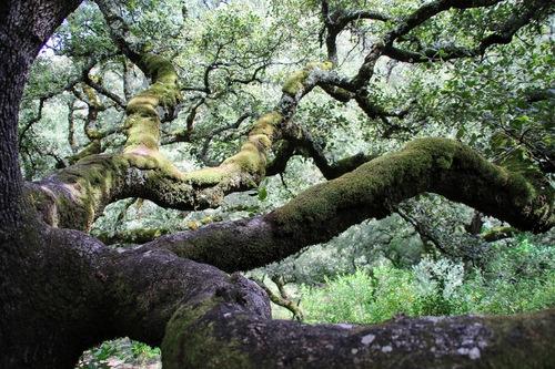 Old oak via Gil Reis