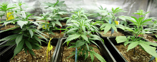 Experienced group of lawyers in New York for cannabis licens... via The James Firm