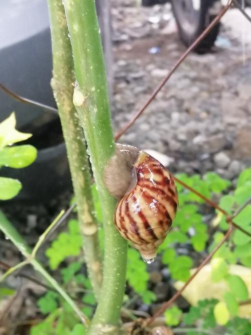 Snail it! via Opel Mendoza