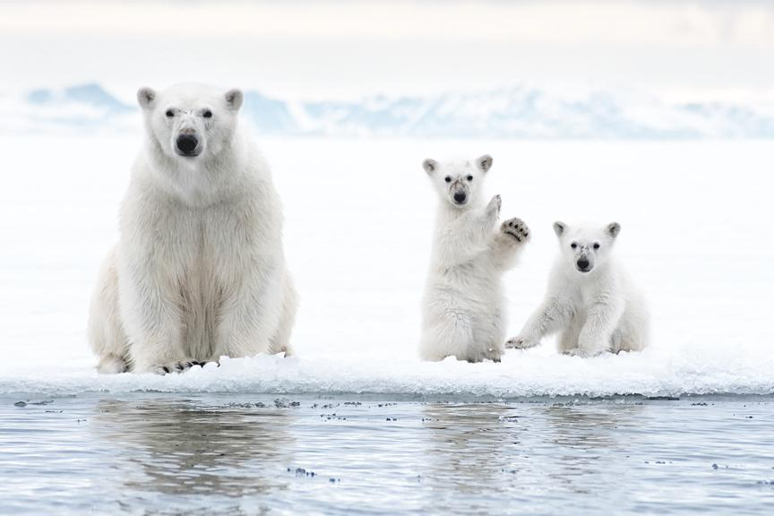 """Love how the one cub appears to be waving. Image entitled """"I... via Tim Temple"""