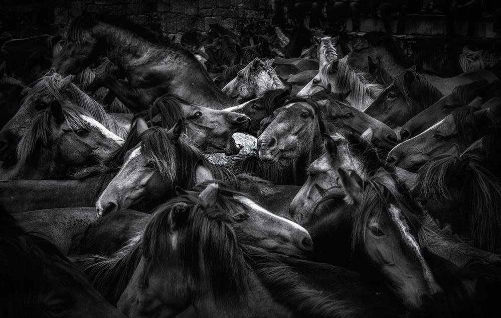 Acorralados!. via Alfonso Maseda Varela