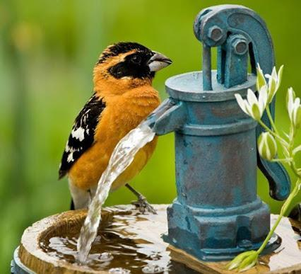 Wonderful bird pic found on Google+ posted by Nature in the ... via Bruce R Witt