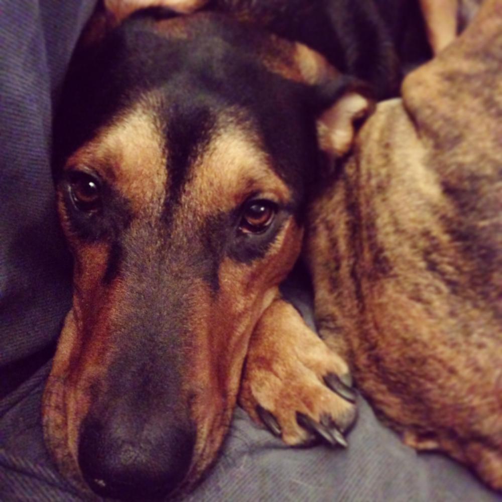 Big brown eyes                                                                                  #dogs #pets #hound via Mikaela Rakos