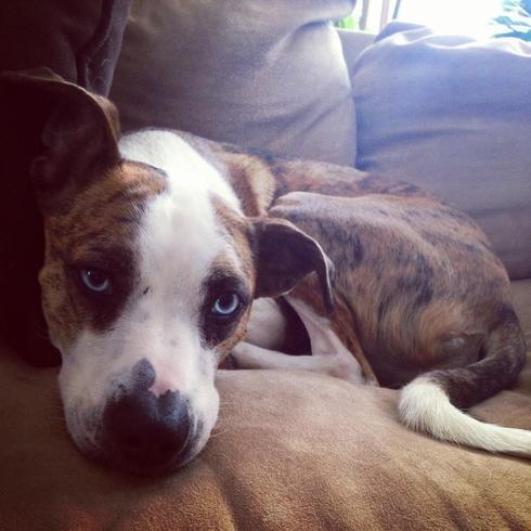 Blue eyed babe                                                                          #dogs #pets via Mikaela Rakos