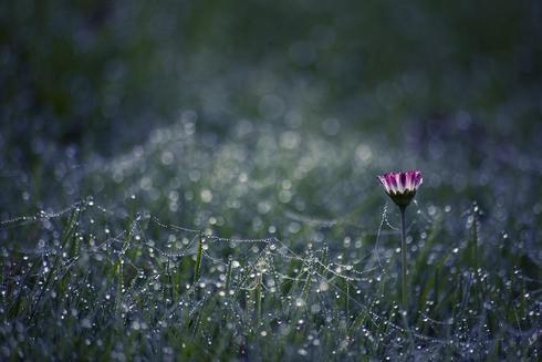 Autumn Raindrops via Sara Kager