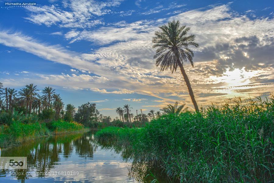 Grassland by Murtadha Alrubaie #Flower #Nature #Sky #Sunset via Joe Liedtke