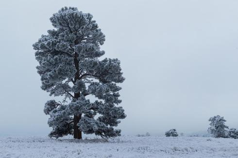 Rewarding early start in 1 temps to witness a wonderful snow... via Bryan Trammell
