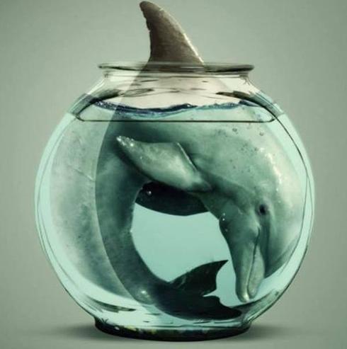 Captivity is cruel #DolphinsLoveUs #Blackfish via Michael Q Todd