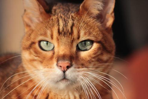 My cat! via Debbie Ward