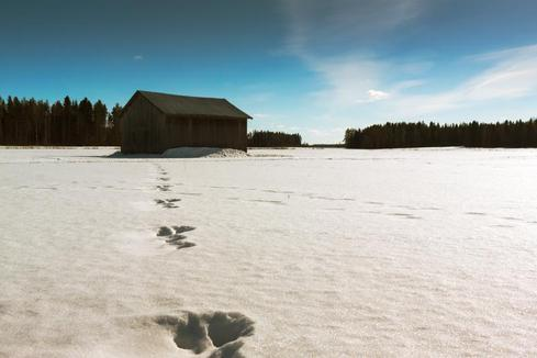 Hare Footprints via Jukka Heinovirta