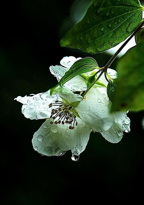 after the rain.... orange blossoms. via Elaine Hunter Photography