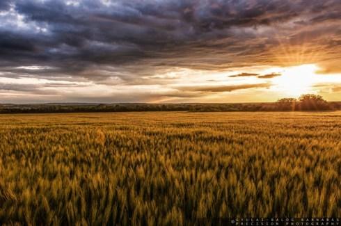 Golden sunset via Barnabás Gyulai-Balog
