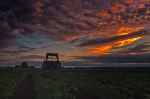 Old Tractor On A Potato Field via Jukka Heinovirta