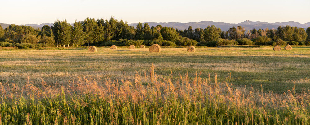 Hale bales at sunset via Stacy White