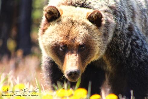 Grizzly Creek. Taken in Kananaskis Alberta.                                      Spotted this gu... via Ken Chambers