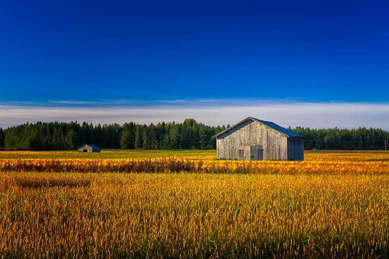 Two Old Barns On An Autumn Field via Jukka Heinovirta