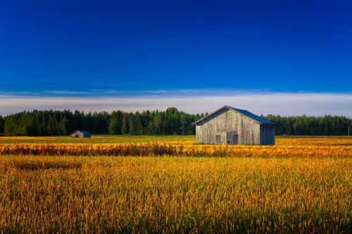 Two Old Barns On An Autumn Field via Jukka Heinovirta