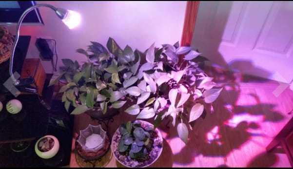 LED Flexible Grow Light Kit with Caring For your Garden E-bo... via michael jones