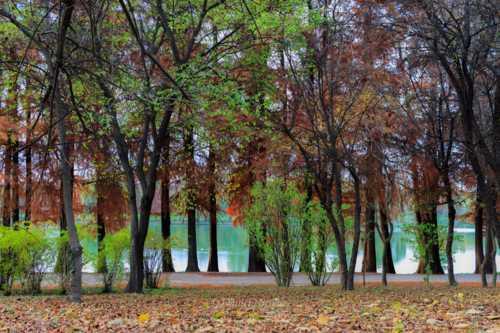 Sweet November by the lake via Daniel Nicolae