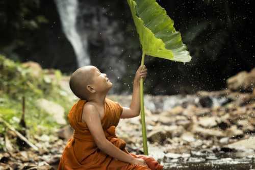Novice is in a fresh nature. via Visoot Uthairam