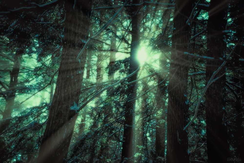 Phantom Warmth                                         A solar breach of the forest canopy;  the ill... via LimebluPhotography
