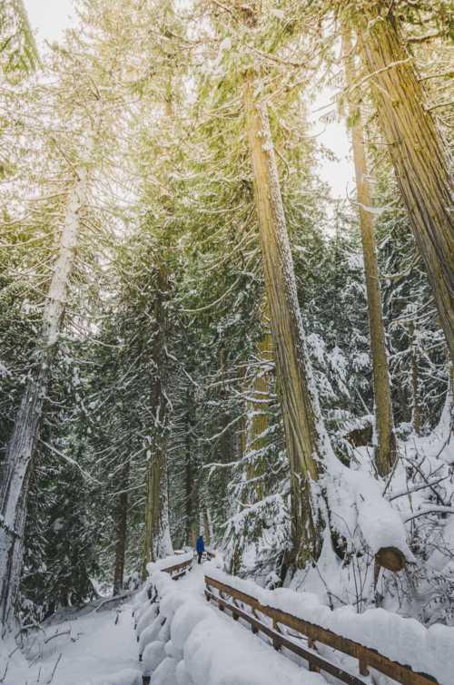 Snowshoeing in a winter wonderland.                                                                           #winter #snowshoeing #... via Kaila Walton