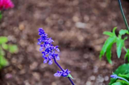 US Botanical Gardens via CozyLayers